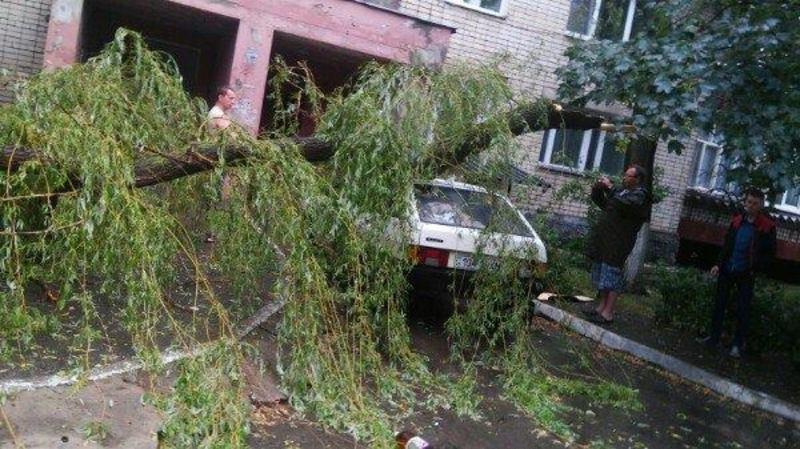 Від сильного вітру попадали дерева в Нетішині