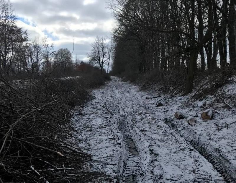 У лісосмузі було виявлено 349 незаконно зрубаних дерев