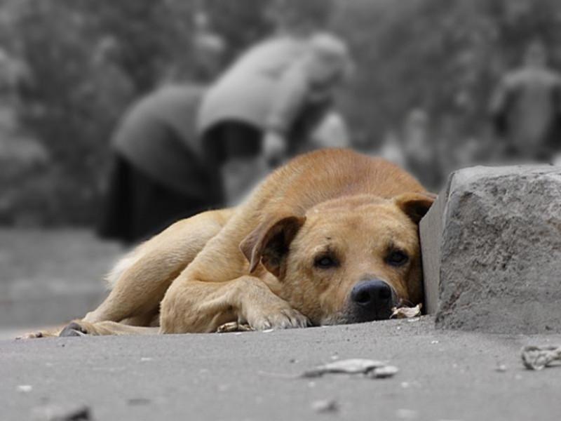 Отруєння собак фіксують третій день поспіль