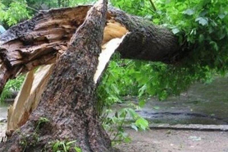 Дерево перешкоджало виїзду каретам швидкої медичної допомоги