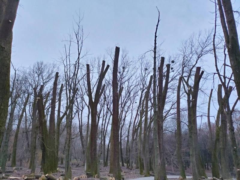 Такий вигляд мають дерева у парку Чекмана
