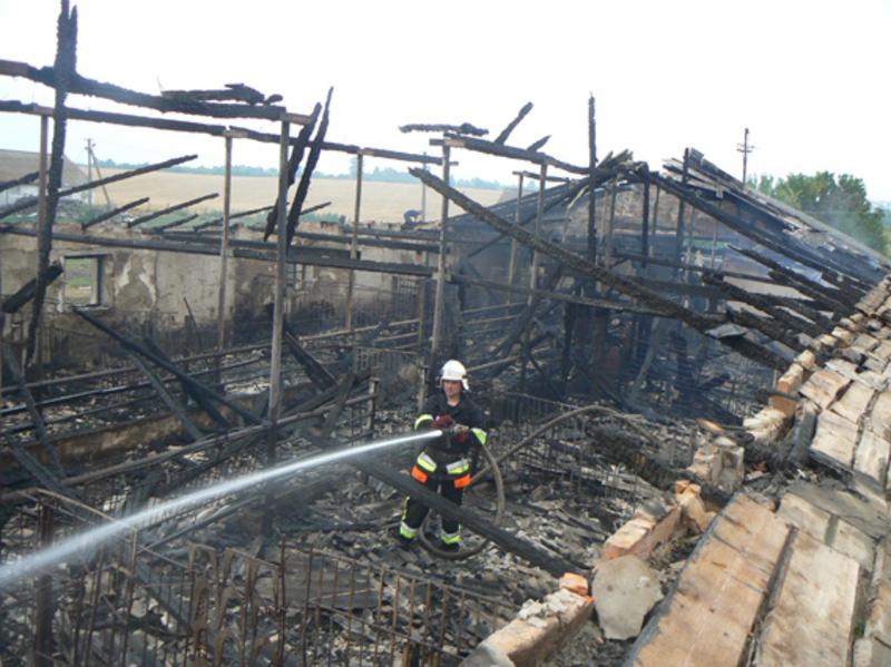 Внаслідок пожежі загинуло 40 свиней