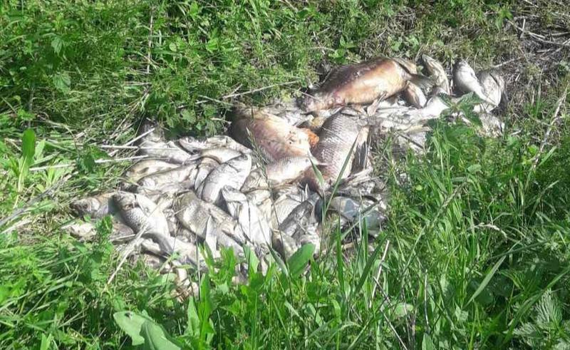 Факт загибелі риби був виявлений у Білогірському районі