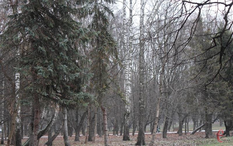 Чоловіка залишили прив'язаним до дерева