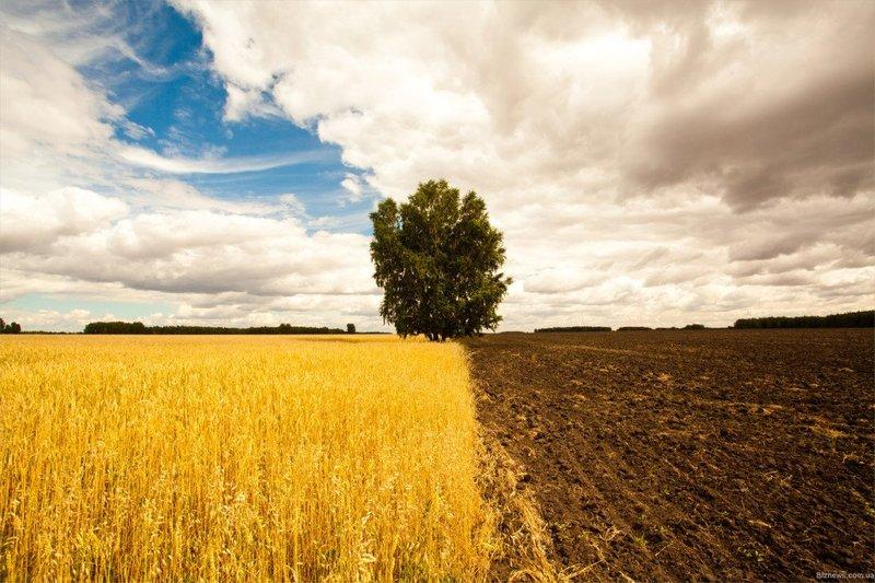 На Хмельниччині для потреб військовослужбовців прийнято 8874 рішення щодо затвердження проектів землеустрою та надання у власність земельних ділянок