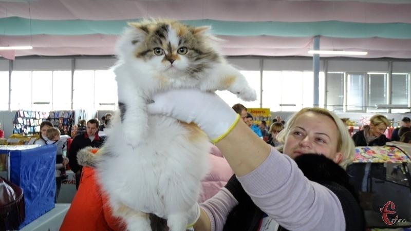 Виставка котів у Хмельницькому відбувається вже вшосте