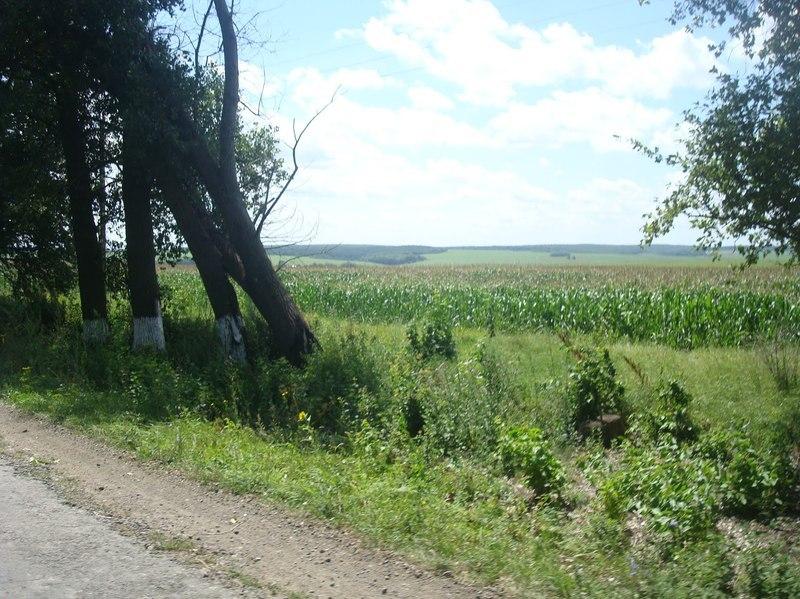 В Яромолинецькому районі виділяли земельні ділянки навіть дітям, які там не мешкали