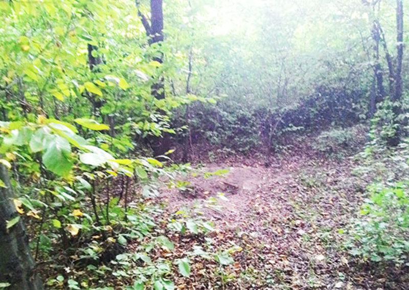 Чоловіка, якого побили та роздягнули, в лісосмузі знайшов випадковий свідок