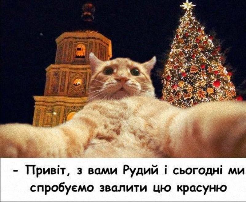 У мережі чимало картинок із ялинкою та котиками