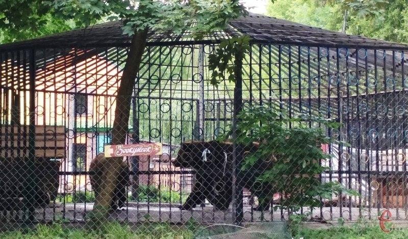 Ведмедям, які мешкають у зоокутку, що в парку імені Михайла Чекмана, мабуть, знову доведеться зимувати в обласному центрі