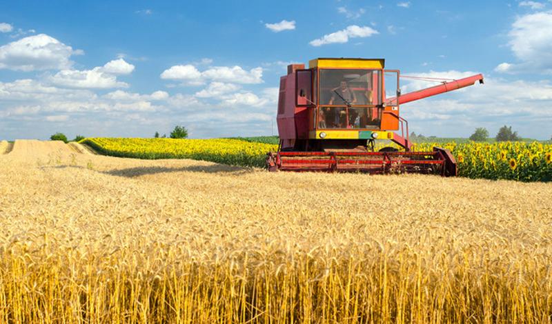 Найбільше товарів хмельницьких аграріїв купують країни Євросоюзу