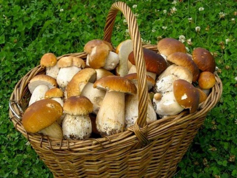 Багато людей ставляться до збору грибів досить легковажно, кладучи до своїх кошиків поряд зі знайомими їстівними й ті, які вперше бачать.
