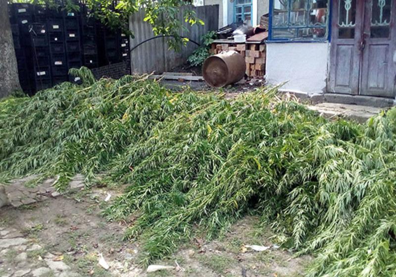 Як пояснив власник домогосподарства,забороненірослини він вирощував для власних потреб