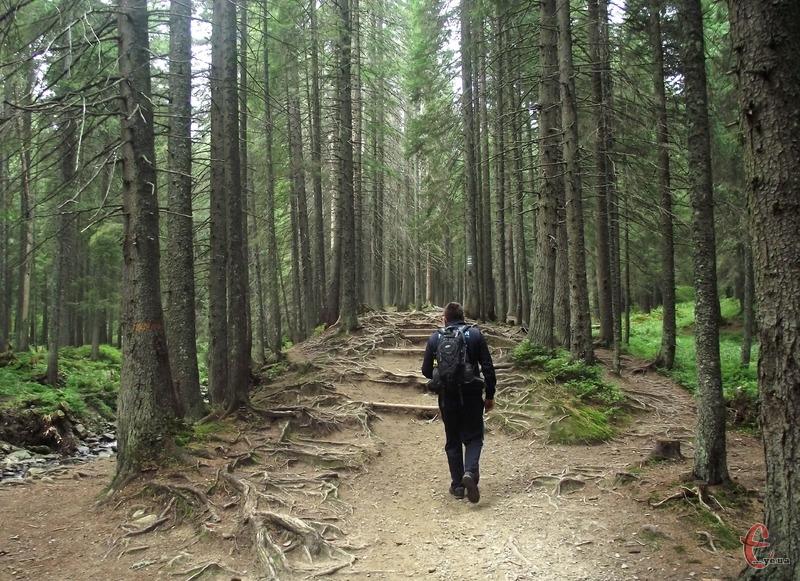 Основна тема «Години Землі 2021» в Україні – збереження старовікових лісів України