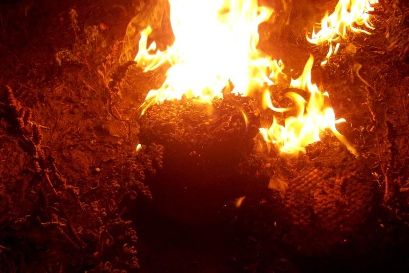 Рятувальники знищили кубло вогнем