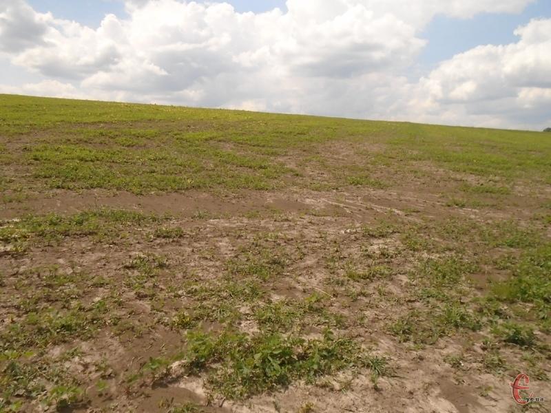 Землю фермерське господарство має повернути державі