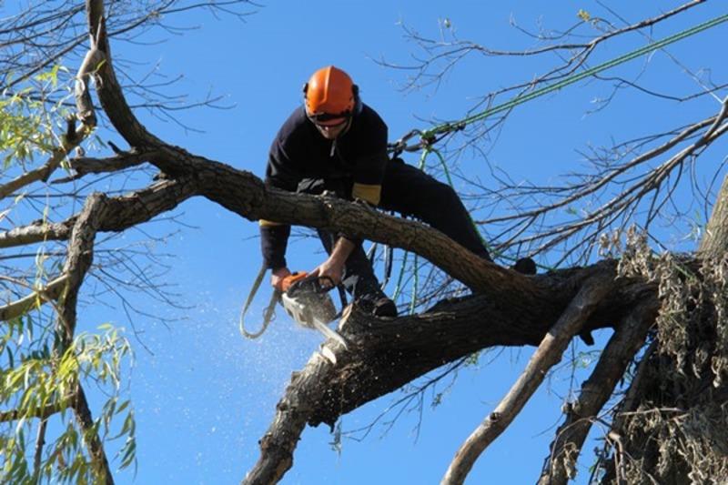 Комунальники обрізатимуть аварійні дерева