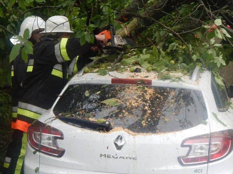 Рятувальники розрізали дерево