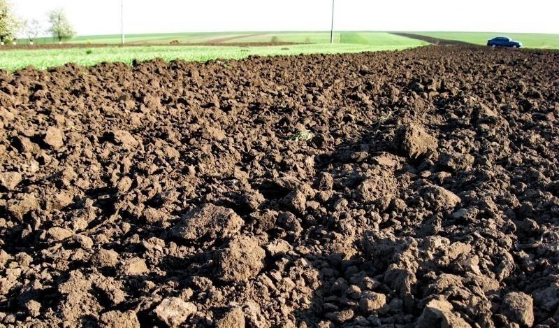 Держземагенство незаконно передало в оренду землі, вартістю 800 тисяч гривень