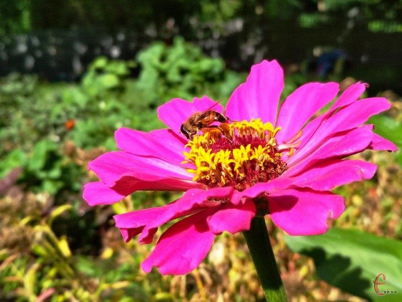 Дощове літо – ідеальне для рослин