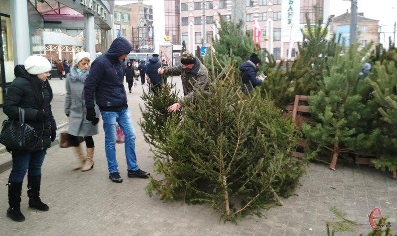 У Хмельницькому продаж новорічних красунь вже два дні триває на повну. Фото: автора