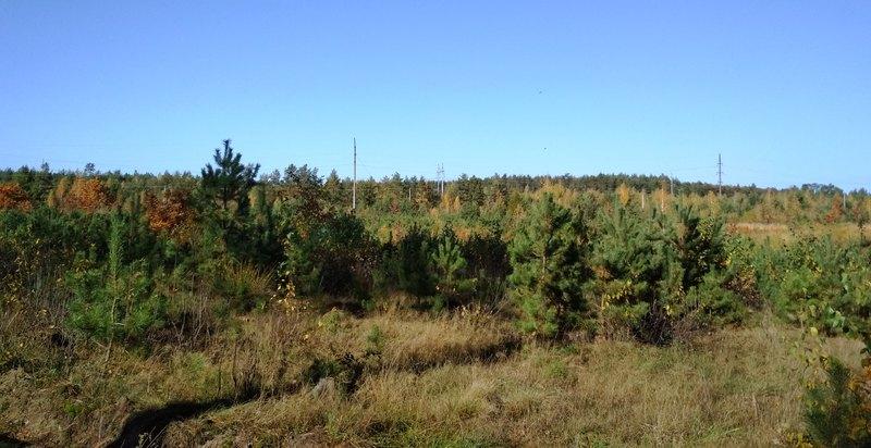 Лісники Хмельниччини цьогоріч перевиконали план посадки лісів