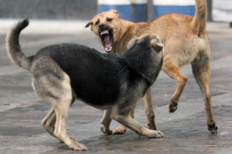 З приходом весни у Хмельницькому почастішали випадки нападу бездомних тварин на людей