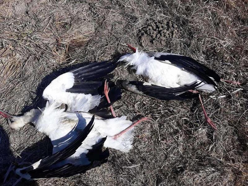 Причини загибелі птахів та звірів має встановити Держпродспоживслужба