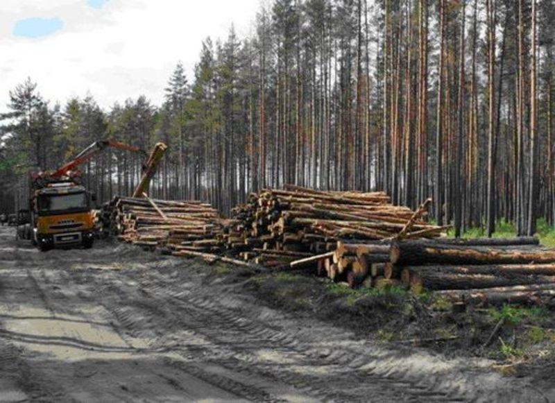 Хто винен у незаконній вирубці лісу в Летичівському районі ще встановлюють