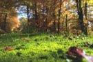 У Хмельницькому незаконно заволоділи землею дендропарку «Поділля»