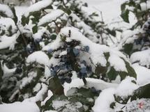 Найнижчу температуру в Хмельницькому метеорологи фіксували 19 січня і 19 лютого