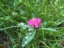 Червень, як і травень, буде дощовим