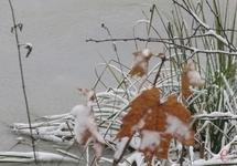 В неділю, за прогнозами синоптиків, падатиме дрібний сніг