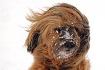 У неділю атмосферний фронт зумовить у більшості областей дощ, подекуди мокрий сніг та поривчастий, вже до штормових поривів, вітер