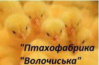 """ТзОВ """"Птахофабрика """"Волочиська"""""""