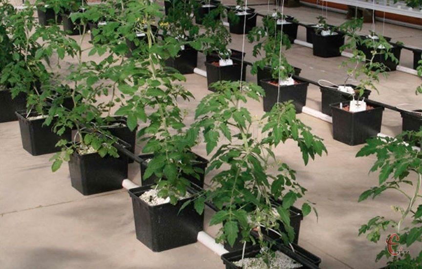 Агроперліт для розсади, грунтосумішей, вирощування квітів