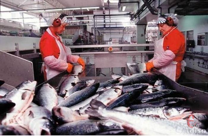 Вакансія агентства: різноробочі на морепродукти