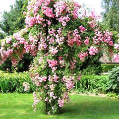 Продам агровермікуліт для садівництва та рослинництва