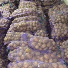 Картошка на насіння не дорого с доставкой