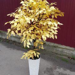 Искусственное Золотое дерево