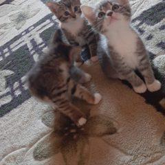 Терміново 3 кішечки в найдобріші ручки!