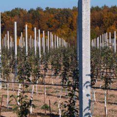 Столбики бетонные для садов, виноградников, оград.