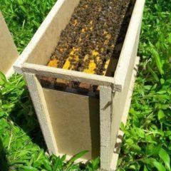 Продам бджолопакети карпатської породи на даданівську (300) рамку