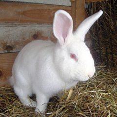 Продам кролів живою вагою, мясної породи