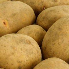 Велика картопля