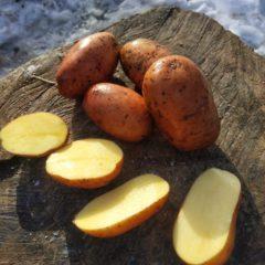 Продам картоплю
