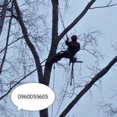 Зрізка дерев, розчистка територій 0960055605