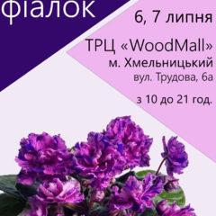 Виставка фіалок у Хмельницькому, 6, 7 липня