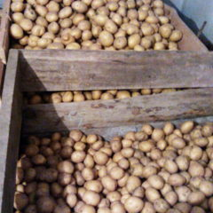 Продам картоплю 2сорт.