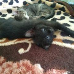 Віддам гарненьких і охайних кошенят